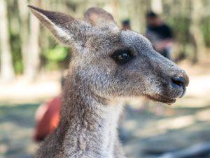 Kangaroo - The Language Academy - Student Activities